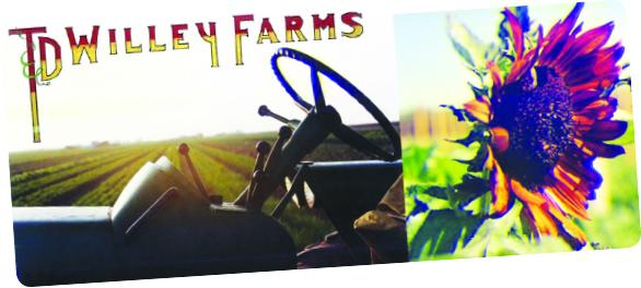 TD Willey Farms Header